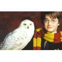 Samolepky - Harry Potter 2